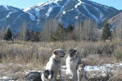pet resort and dog boarding in Sun Valley